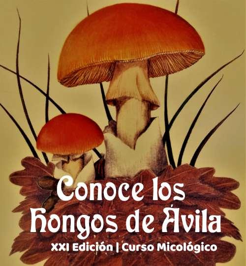Conoce los hongos de Ávila (.pdf)
